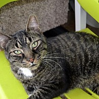 Adopt A Pet :: Boris *Special Adoption Fee - Akron, OH