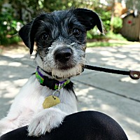 Adopt A Pet :: Dixie Carter - Jersey City, NJ