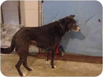 Border Collie Mix Dog for adoption in Zanesville, Ohio - Max/Adopted!