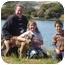 Photo 4 - American Pit Bull Terrier Mix Dog for adoption in Berkeley, California - Hendrix