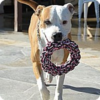 Adopt A Pet :: DOZER - Lucerne Valley, CA