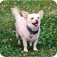 Adopt A Pet :: Molly II *Foster* - Glen Allen, VA