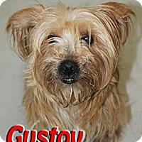 Adopt A Pet :: Gustov - Midland, TX