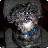 Adopt A Pet :: Winston - Mays Landing, NJ
