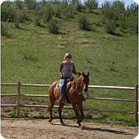 Adopt A Pet :: Shy Reynolds - Pueblo, CO
