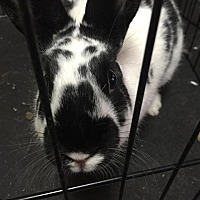 Adopt A Pet :: Oakley - Elizabethtown, KY