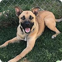 Adopt A Pet :: Val - Anaheim, CA