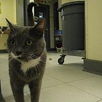 Adopt A Pet :: Zeke - Milwaukee, WI
