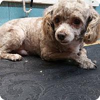 Adopt A Pet :: Herbie - Crump, TN