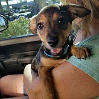 Adopt A Pet :: Dougan - Chandler, AZ