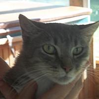 Adopt A Pet :: Arnold - Salisbury, NC