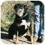 Photo 3 - German Shepherd Dog/Rottweiler Mix Dog for adoption in California City, California - Dutchess