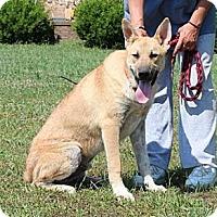 Adopt A Pet :: Nicolas--Fee reduced to $200 - Spring Valley, NY
