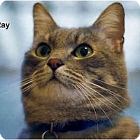Adopt A Pet :: Ray - Portland, OR