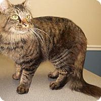 Adopt A Pet :: Hamilton - Monroe, GA