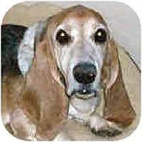 Adopt A Pet :: Gilbert - Phoenix, AZ