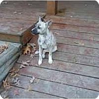 Adopt A Pet :: Camile - Fulton, MD