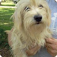 Adopt A Pet :: Jake - Albany, NY