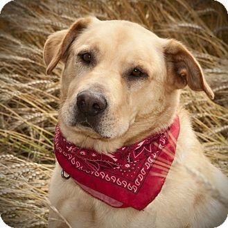 Labrador Retriever Mix Dog for adoption in Austin, Texas - Dash