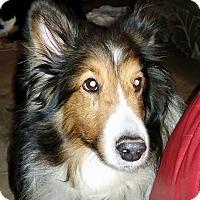 Adopt A Pet :: Bearie - COLUMBUS, OH