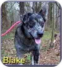 Blue Heeler Mix Dog for adoption in Aldie, Virginia - Blake