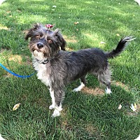 Adopt A Pet :: *Maggie - PENDING - Westport, CT
