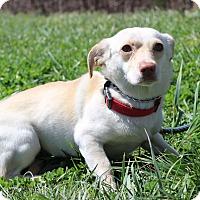 Adopt A Pet :: Alec - Waldorf, MD