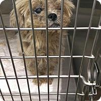 Adopt A Pet :: Cleo - Benton, LA