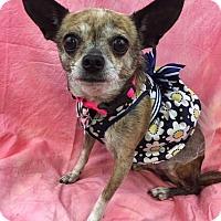 Adopt A Pet :: June - Lake Elsinore, CA