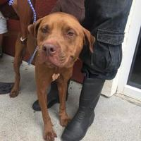 Terrier (Unknown Type, Small) Mix Dog for adoption in St. Thomas, Virgin Islands - OAK