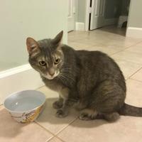 Adopt A Pet :: MADDIE - Mesa, AZ