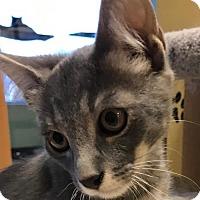 Adopt A Pet :: Luie - Auburn, CA