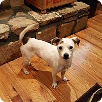Adopt A Pet :: Francee - Duluth, GA