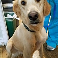 Adopt A Pet :: Murphy - BIRMINGHAM, AL