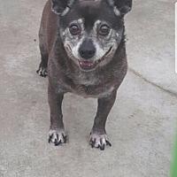 Adopt A Pet :: Smiley - Adoption Pending - Oakton, VA