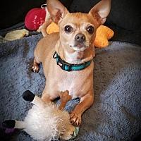 Adopt A Pet :: Rudi - Garner, NC