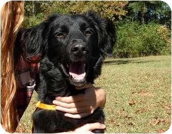 Setter (Unknown Type) Mix Dog for adoption in Thomaston, Georgia - Smiley