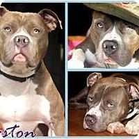 Adopt A Pet :: Preston - Toledo, OH