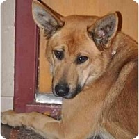 Adopt A Pet :: Riggs - Hamilton, MT