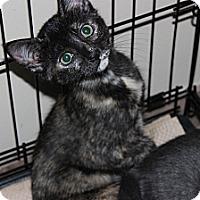 Adopt A Pet :: Janey - Secaucus, NJ