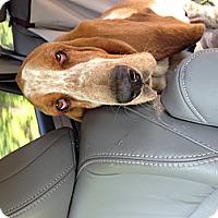 Adopt A Pet :: Willie - Columbia, SC