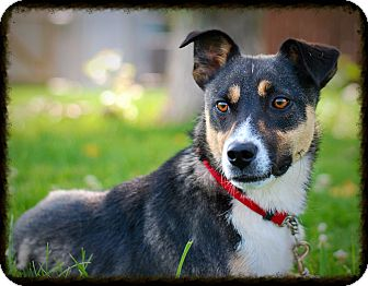Jack Russell Terrier Mix Dog for adoption in Elyria, Ohio - Wally