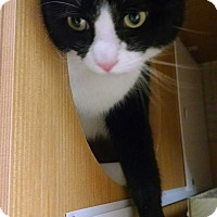 Adopt A Pet :: Candy - East Meadow, NY