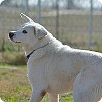 Adopt A Pet :: Brantley - El Campo, TX