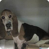 Adopt A Pet :: Putzie - Albuquerque, NM