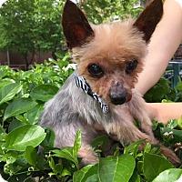 Adopt A Pet :: Butch - Long Beach, NY