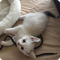 Adopt A Pet :: Tommy - Lakewood, CA