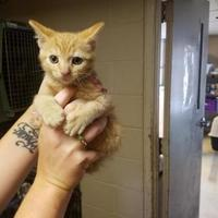 Adopt A Pet :: Andy - Russellville, KY