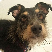 Adopt A Pet :: Duffy - Columbus, OH