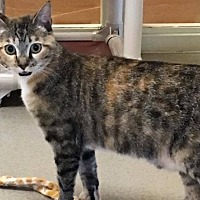Adopt A Pet :: Monarch - Newland, NC